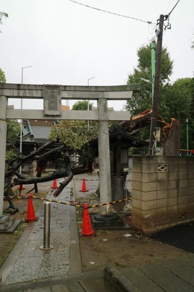 倒木発生時の今井神社