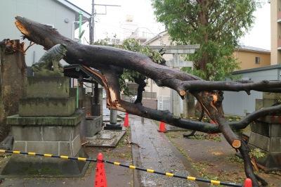 今今井神社の倒木