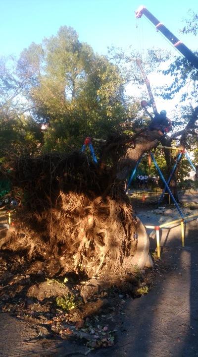中原平和公園の倒木