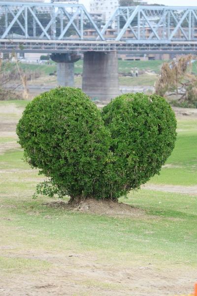 ハート形の木
