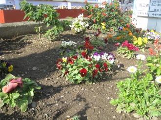 工事現場の花